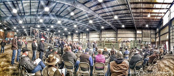 large_crowd_at_bull_sale.jpg
